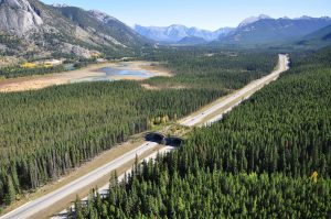A wildlife overpass on the Trans-Canada Highway, Banff National Park. Credit: Adam Ford