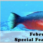 February 2014 Jigsaw Special Feature: Fisheries