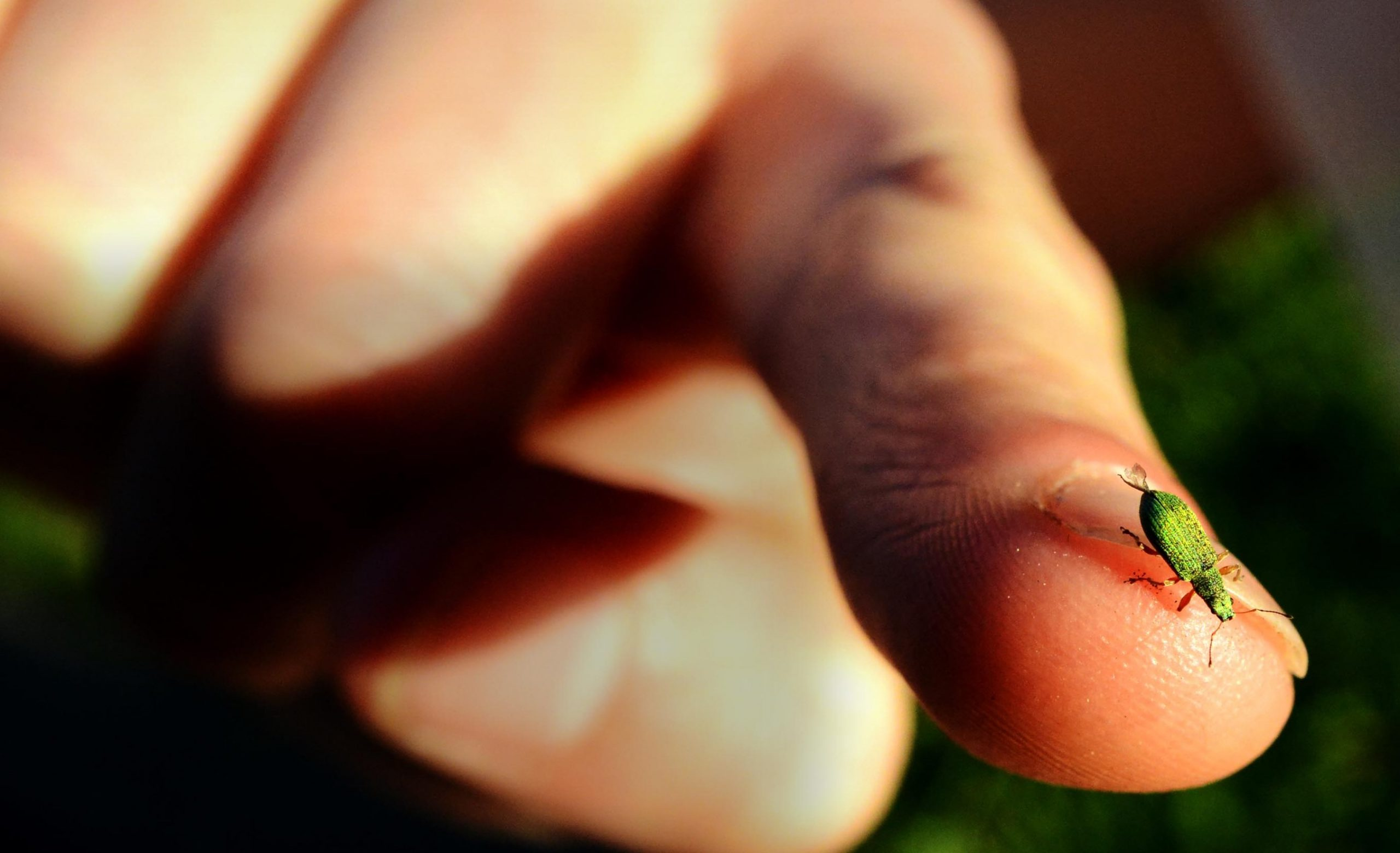 A small insect sits at the end of a human finger.