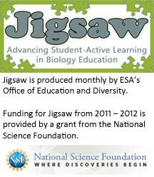 Jigsaw Newletter