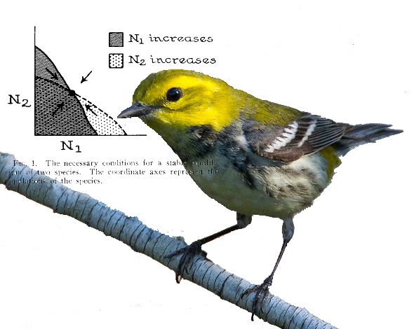Figure 1 from MacArthur's 1958 paper in Ecology with black-throated green warbler photographed by Dan Pancamo