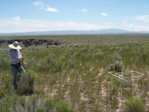 Robert Arkle collected data at Clover Creek in 2009, near perimeter of a fire that burned on Idaho's Owyhee High Plateau in 1994. Credit (co-author) David Pilliod.