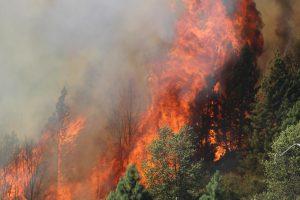 Rim Fire, California 2013. Mike McMillan, USFS.