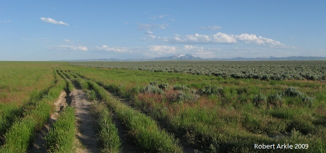 Invasive grasses mark the Poison Creek fire line on the Owyhee High Plateau. Jarbidge Mtns in background.