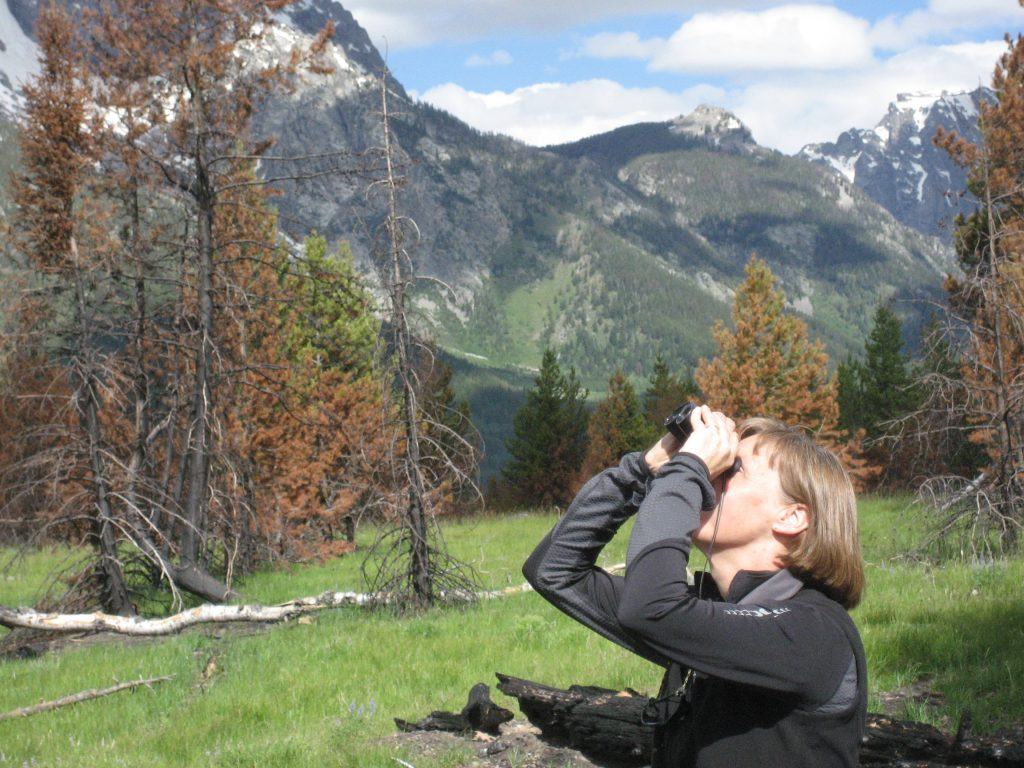 New 2015-16 ESA President Monica Turner surveys the site of the Bearpaw Bay fire in July 2010, one year after it burned in the summer of 2009. The lodgepole pine p inus contorta) forest near Jackson Lake in Grand Teton National Park had burned just 28 years previously, in a region that more typically burns at 200 year intervals. A trend toward a warmer, dryer climate in the Rocky Mountains is likely to increase fire frequency, which could have consequences for the regeneration of the forest and carbon storage. Turner's research group has ongoing, long term investigations into seedling recruitment, carbon storage, and other questions about the effects of natural disturbances on vegetation dynamics in the region of Yellowstone. Credit, Monica Turner.