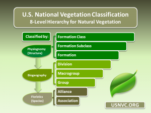 USNVC 8 level hierarchy