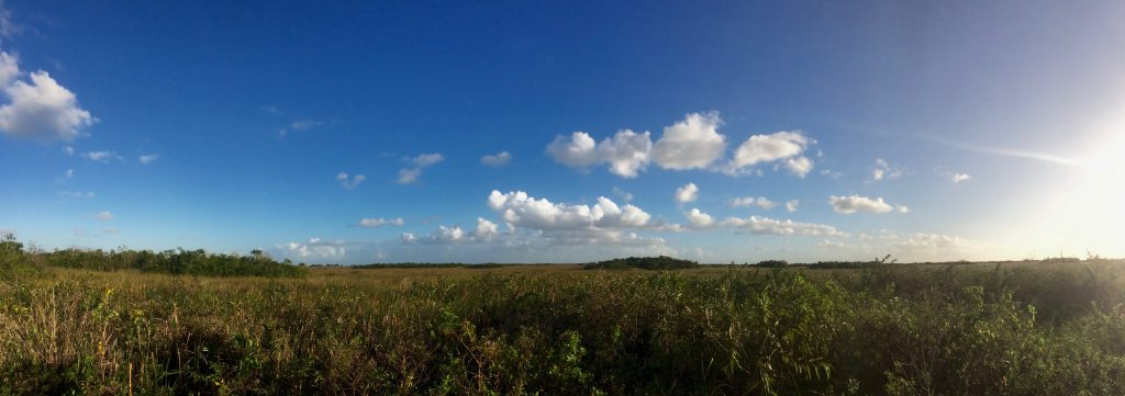 Everglades National Park. Credit, Julian Boed.