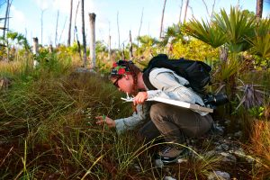 Brittany Harris at a field site in the Florida Keys. Credit Brittany Harris.