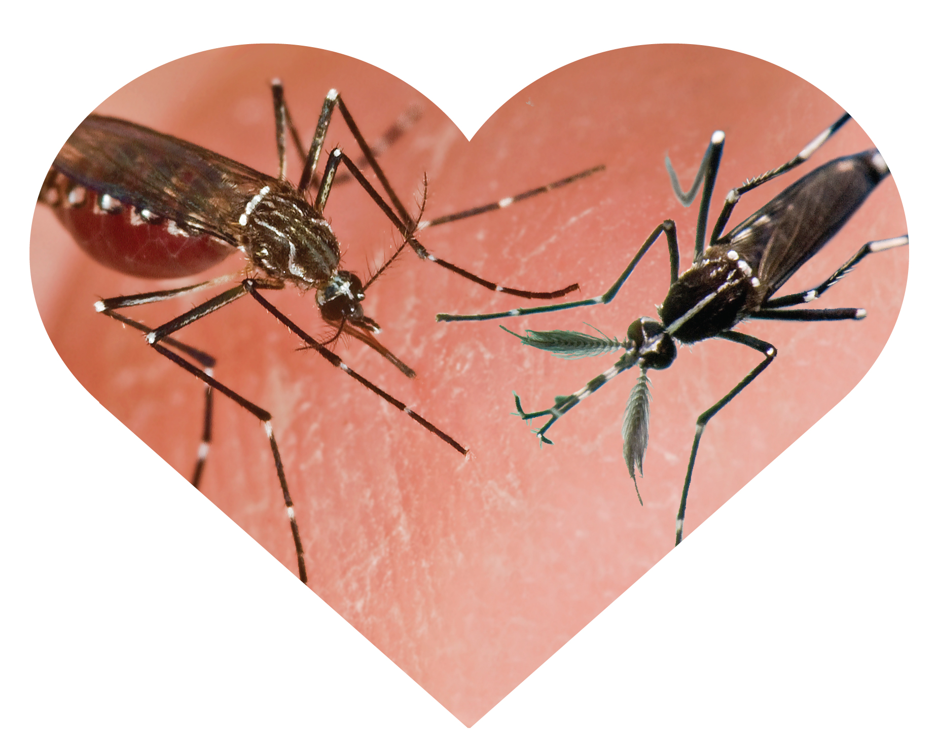Mosquito Ecology And Disease At The Ecological Society Of -7712