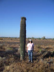 Biogeographer Taly Drezner stands beside a middle-aged saguaro cactus at Kofa National Wildlife Refuge near Yuma, Arizona. Credit, Taly Drezner