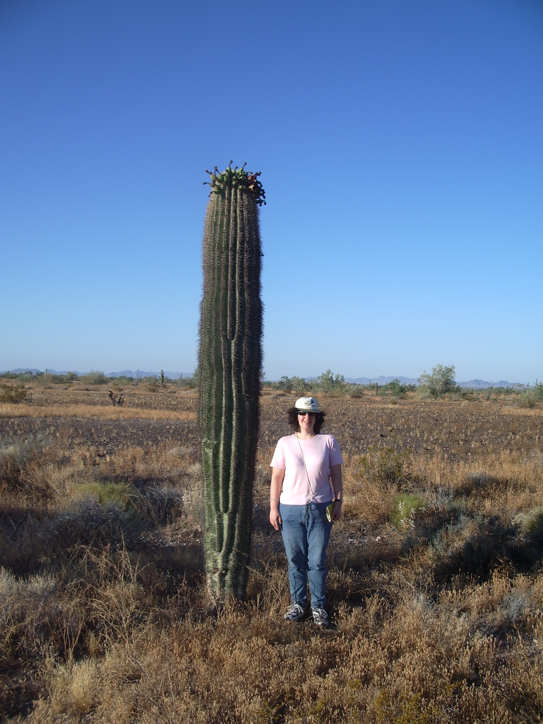 Distant Volcanic Eruptions Foster Saguaro Cacti Baby Booms