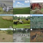 Figure 1: Grasslands from nine geographically separated regions showing spatial mosaics of lawn and tall plant communities co-occurring where large herbivores are present. (A) Tundra, Arctic (source: ehow.com); (B) Steppe, Mongolia (source: fao.org); (C) Temperate heathland, United Kingdom (source: geographic.org.uk); (D) Temperate salt marsh, North-west Europe (photo: Ruth Howison); (E) Temperate grassland, North-west Europe (photo: Han Olff); (F) Mixed Prairie, south central United States, Texas (source: fao.org); (G) Semi-tropical savanna, Southern Africa (photo: Ruth Howison); (H) Dryland, Sahel (photo: Johan van de Koppel); (I) Temperate savanna, South-east Australia (source: nationalgeographic.com).