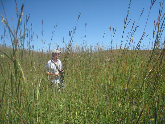 Jesse Nippert in the tall grass at Konza Prairie Biological Station