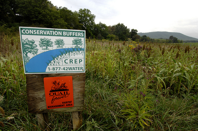 usda conservation buffers Chesapeake Bay