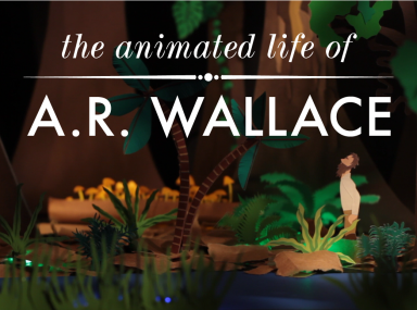 """still from """"The Animated Life of A.R. Wallace."""" Sweetfern Productions."""