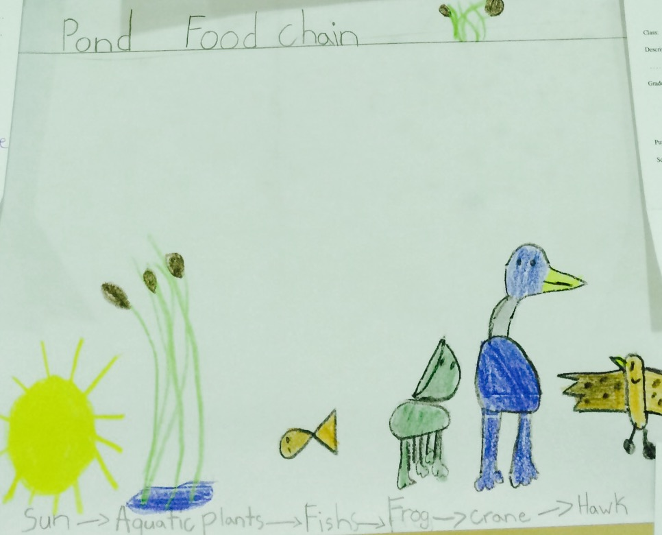An elementary school student imagines a food chain. Chris Buddle.