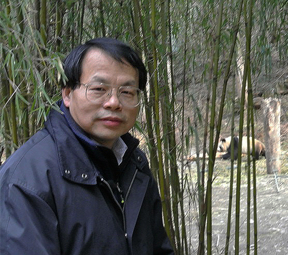 Jianguo 'Jack' Liu visits Wolong Nature Reserve for giant pandas (Sichuan Province, China) in 2013. Dr. Liu is the Rachel Carson Chair in Sustainability and director of the Michigan State University Center for Systems Integration and Sustainability. He and his collaborators have been working on pandas and people for more than two decades and have contributed to the panda recovery that led to its recent removal from the endangered species list. Credit: Sue Nichols