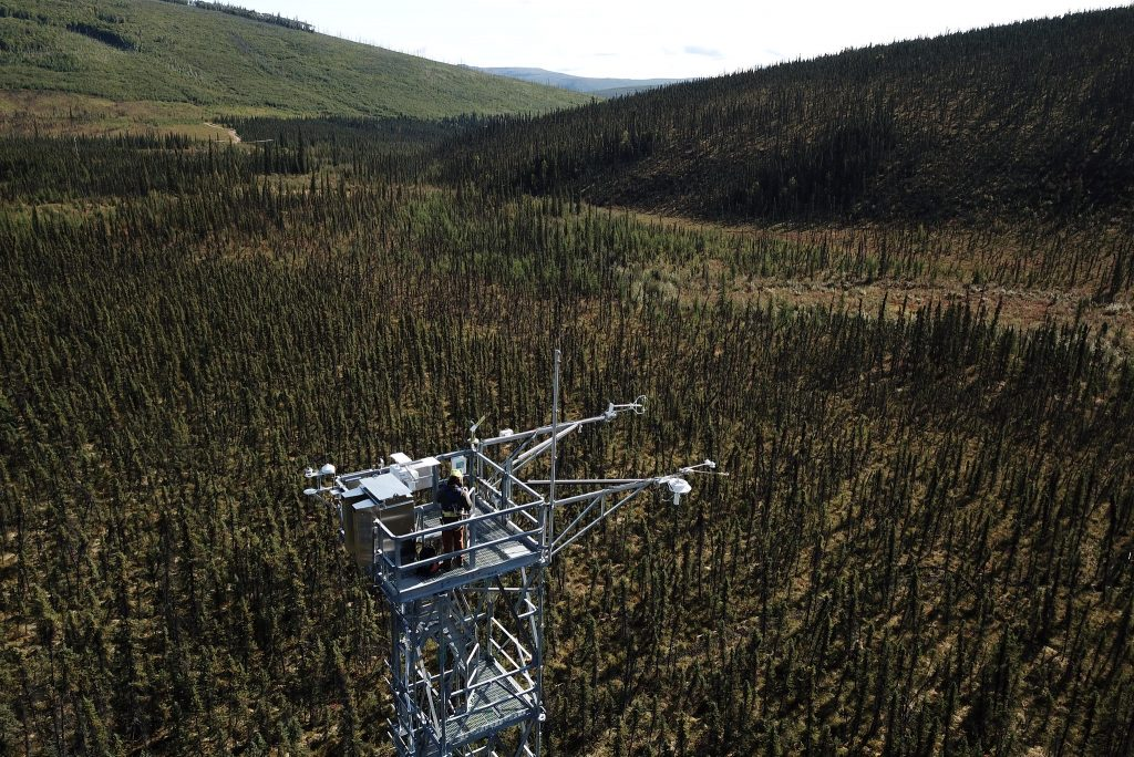 A large metal observatory rises above a swath of evergreen trees in a mountainous landscape. Some of the trees appear to be charred from fire. A field technician wearing a helmet and other gear stands on top of the metal tower, their back to the camera.