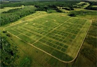 Cedar Creek's 15-acre biodiversity plots