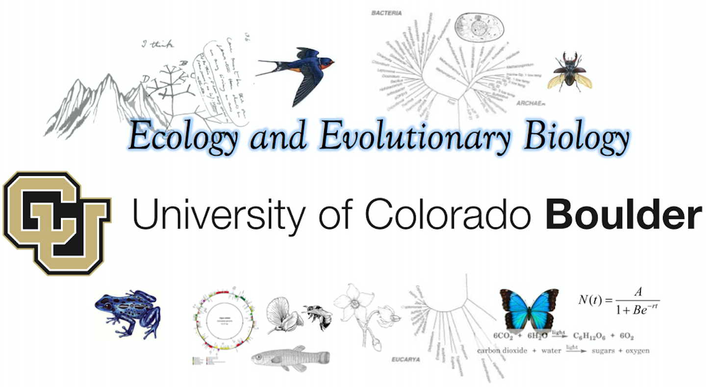 University oF Colorado official logo.