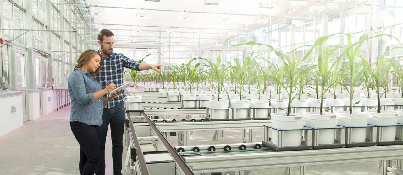 Two people examine a set up of plants growing in rows within a greenhouse.