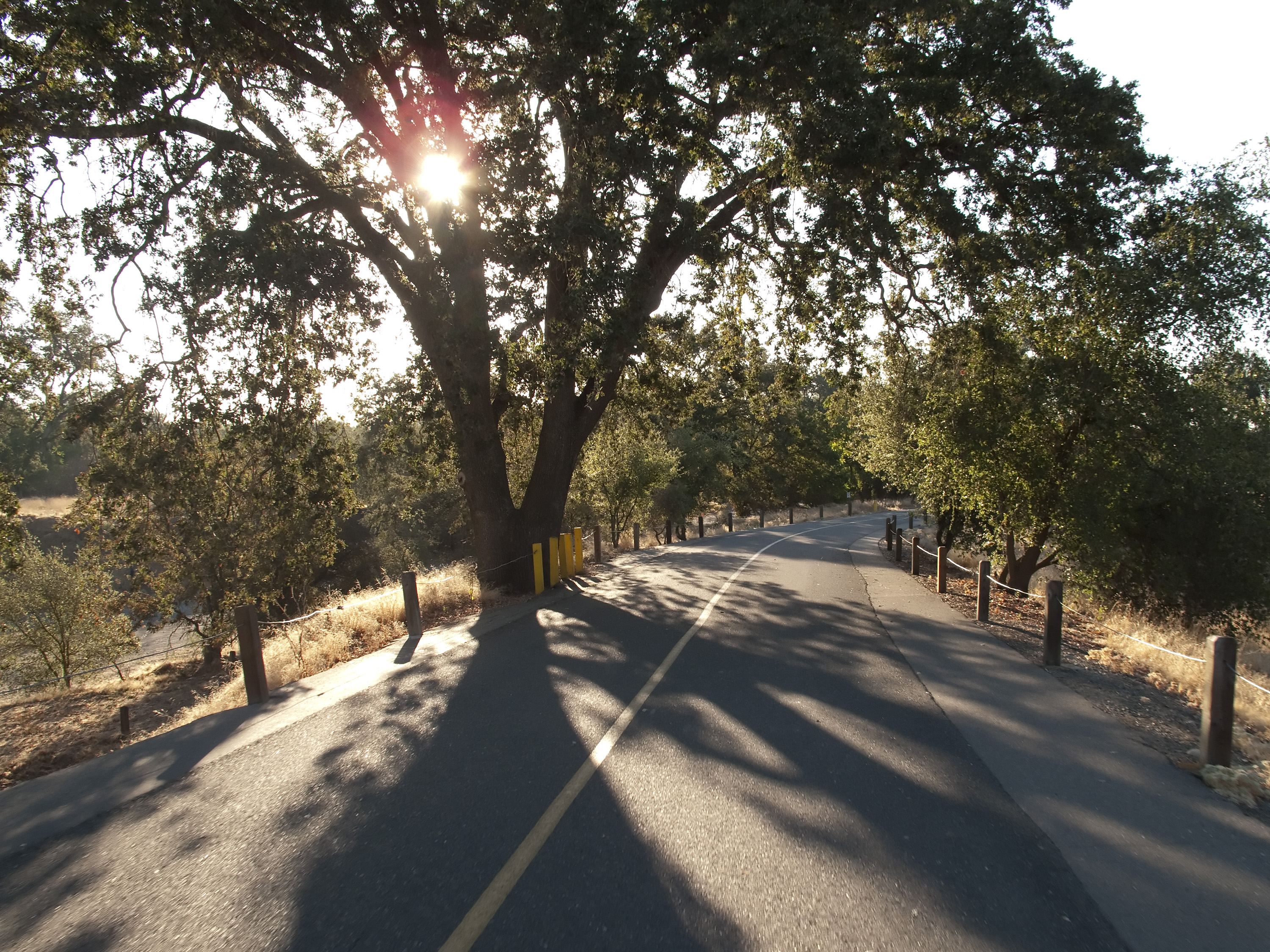 American River Parkway morning Photo by Robert Course_Baker