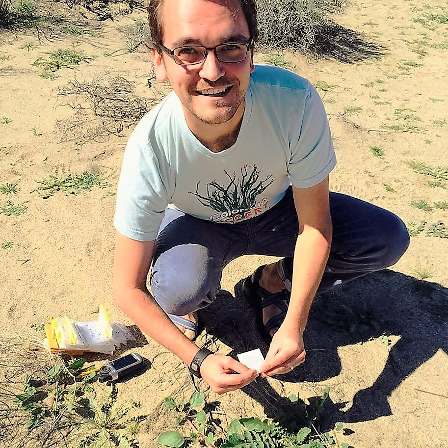 Daniel Winkler collects plant tissue samples for genomic analyses to uncover the spread of the invasive Sahara mustard in Anza-Borrego Desert State Park, California in February 2015. Credit: Susan Gilliland.