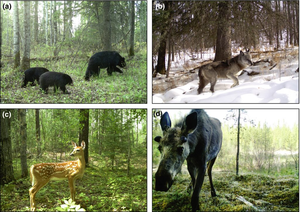 Deer, elk and bear are some of the images captured on this collage.