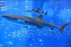 400103149 300x200 - Ocean giant gets a health check