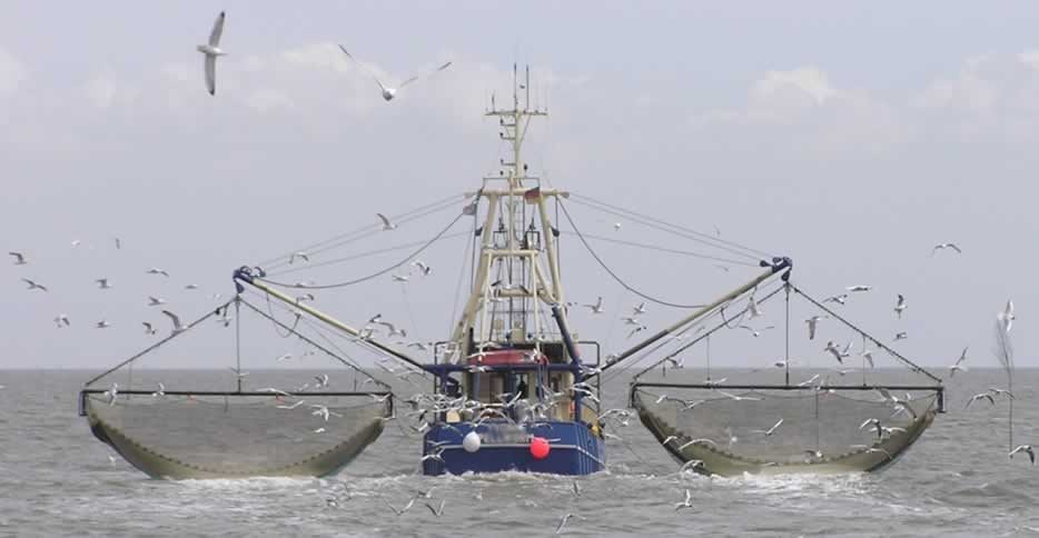 A fishing boat with nets out on both sides trawls for seafood with Sea Gulls following closely behind.