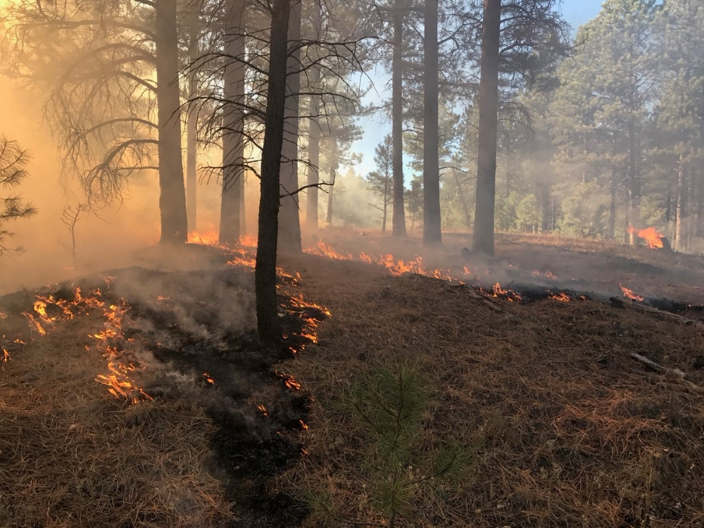 Prescribed Fires   North Rim   Kaibab   Grand Canyon   2017 01small - Restoring forests means less fuel for wildfire and more storage for carbon