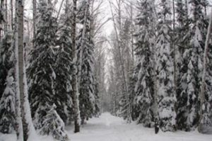 snow winter forest trail 4538 crop 300x199 - UNH Researchers Find Northern Forests Have Lost Crucial Cold, Snowy Conditions