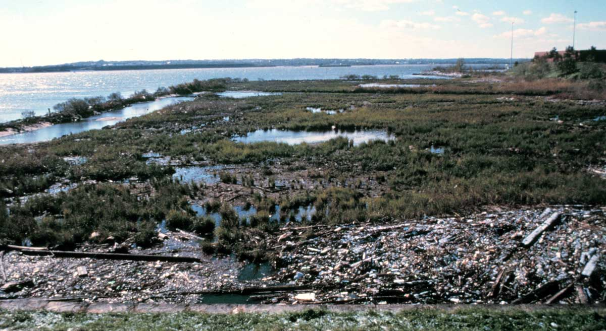 A wetland cleanup location is strewn with marine debris.