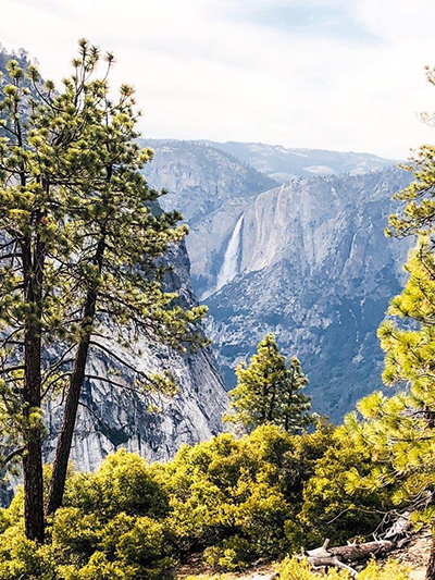 A portrait view of a valley includes tall trees in the foreground.