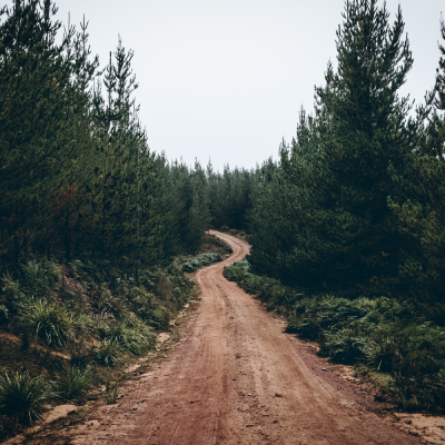 Ecology of Rural Roads